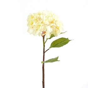 Cream Hydrangea Stem, 30 in.