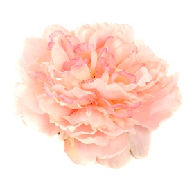 Pink Floating Peony Blossom