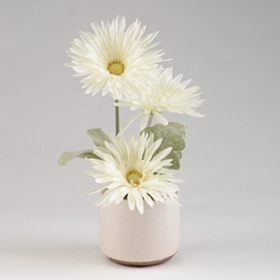 White Gerbera Daisy Arrangement