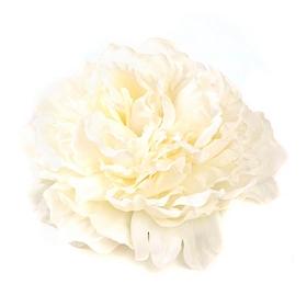 Cream Floating Peony Blossom