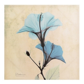 Turquoise X-ray Floral I Canvas Art Print