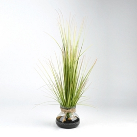 Glass Vase Grass Arrangement