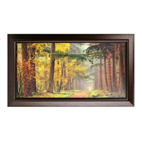 Colors of the Forest Framed Art Print