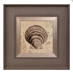 Shell Sketches I Framed Art Print