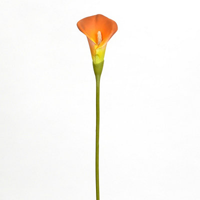 Orange Calla Lily Stem