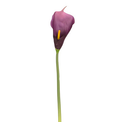 Purple Calla Lily Stem