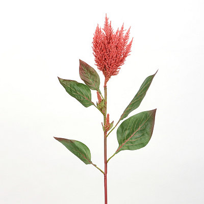 Red Cockscomb Stem