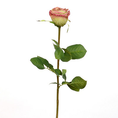 Green Garden Rose Stem