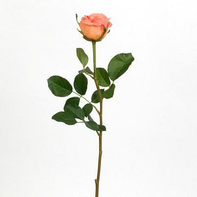 Peach Garden Rose Stem