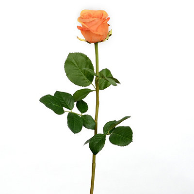 Orange Garden Rose Stem