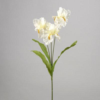 White Iris Stem