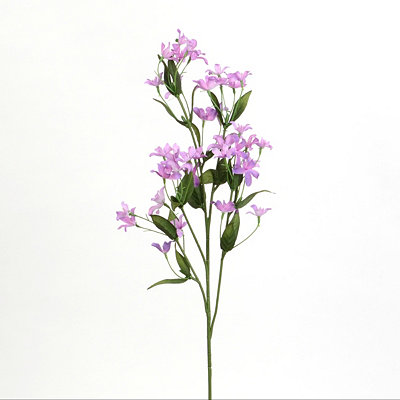 Purple Jasmine Stem
