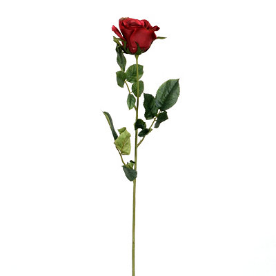 Open Red Rose Stem