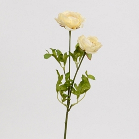 Ivory Ranunculus Stem, 25 in.