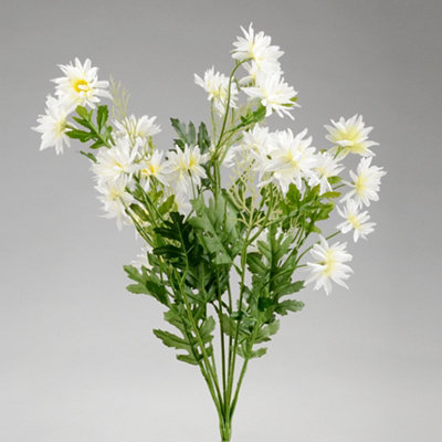 White Wild Daisy Bush