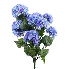Blue Garden Hydrangea Bush