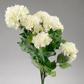 White Garden Hydrangea Bush