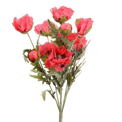 Red Poppy Bush
