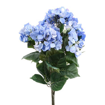 Natural Blue Hydrangea Bush