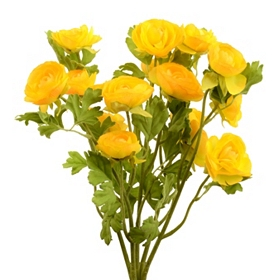 Yellow Ranunculus Bush