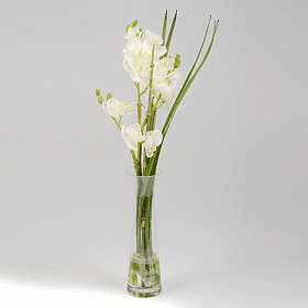 White Orchid Arrangement in Tall Glass