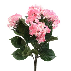 Natural Pink Hydrangea Bush