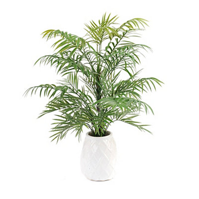 Tabletop Parlor Palm Arrangement, 22 in.
