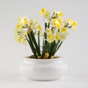 Pre-Lit Potted Daffodil Arrangement with Timer