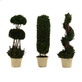 Boxed Green Topiaries, Set of 3