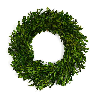 Preserved Boxwood Wreath, 17 in.