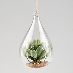 Organic Hanging Succulent Arrangement, 5 in.