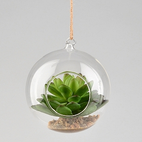 Organic Hanging Succulent Arrangement, 4 in.