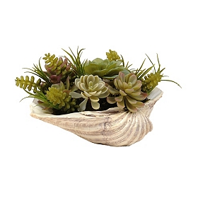 Succulent Arrangement in White Seashell