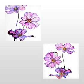 Electric Purple Floral Canvas Art Prints, Set of 2