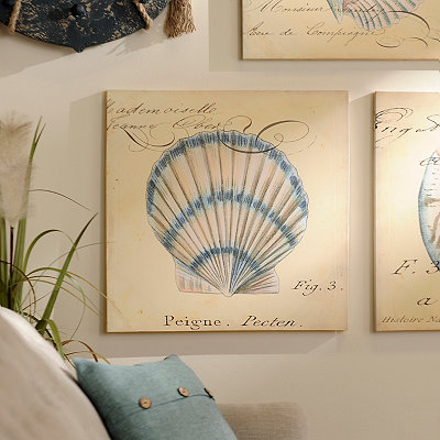 Scallop Canvas Art Print