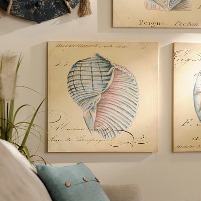 Seashell Canvas Art Print