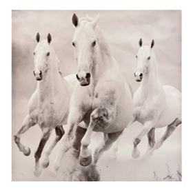 White Horses Canvas Art Print