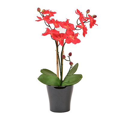 Red Orchid Floral Arrangement, 25 in.