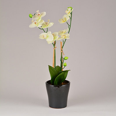 White Orchid Floral Arrangement, 25 in.