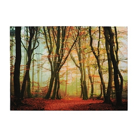 Foggy Autumn Forest Canvas Art Print