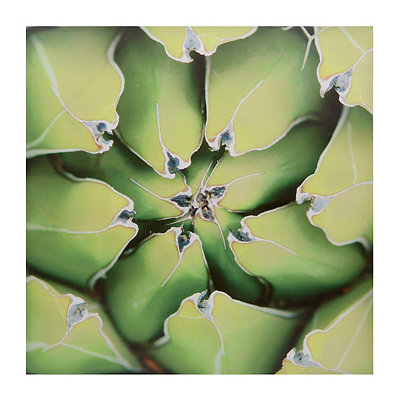 Green Succulent Plant Canvas Art Print