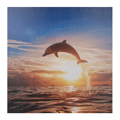 Dolphin Sunrise Canvas Art Print