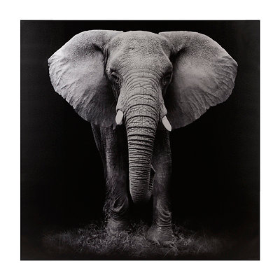Black & White Elephant Canvas Art Print