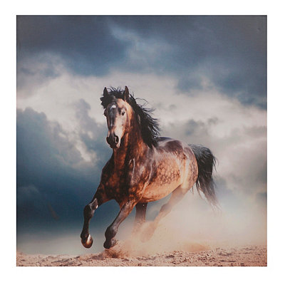 Wild Stallion Canvas Art Print