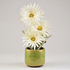 Green Gerbera Daisy Arrangement