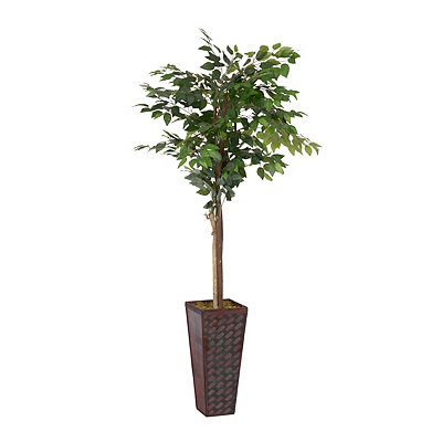 Ficus Tree with a Red Woven Planter, 6 ft.