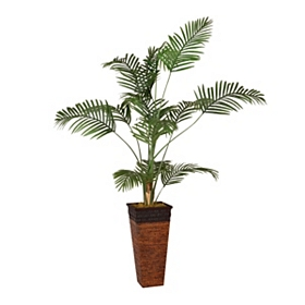 Areca Palm Tree, 7 ft.