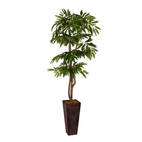 Mango Tree with a Red Woven Planter, 7 ft.