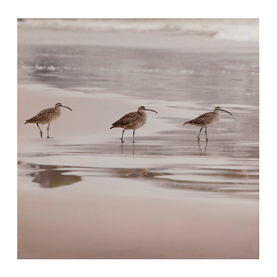 Sandpipers I Canvas Art Print