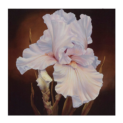 White Iris Canvas Art Print